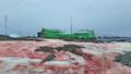南极出现西瓜雪怎么回事 南极出现西瓜雪不浪漫还可能很危险