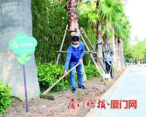 厦门园林工人复工忙 精心作业提升城市绿化质量