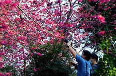 福建福州:市民安全有序賞春光