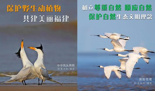 世界野生動植物日 福建省林業局發布公益廣告