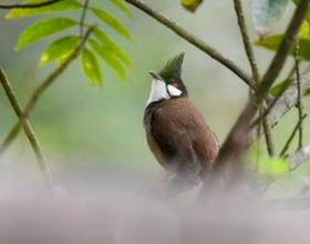 福建福州:鳥兒枝頭春意鬧
