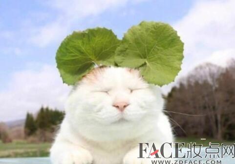 日本网红猫咪猫叔去世新闻先容 网红猫咪猫叔怎么火的