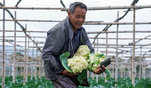 漳州龙文:蔬嗯菜上市正当时�① 线ㄨ上拓宽销售渠道