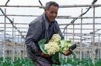 漳州龍文:蔬菜上市正當時 線上拓寬銷售渠道