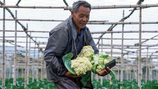 漳州龙文:蔬菜上市正当时 线上拓宽销售渠道