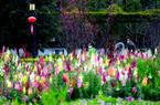 福建福州:春暖花開 市民戶外踏青