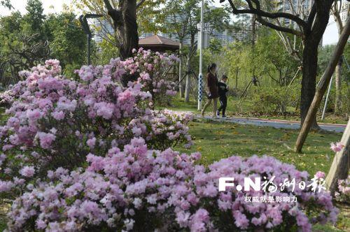 福州琴亭湖杜鹃初放 赏花牢记文明游览