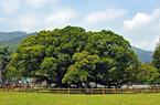 福建福州:春天,是种树种出来的