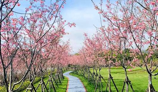 福州烏山風景區桃花盛開春意濃