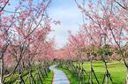 澳门皇冠游戏视讯乌山风景区桃花盛开春意浓