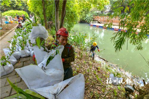 """福州白马河""""五彩底妆""""化起来 1.7公里河道两侧将开各色花朵"""