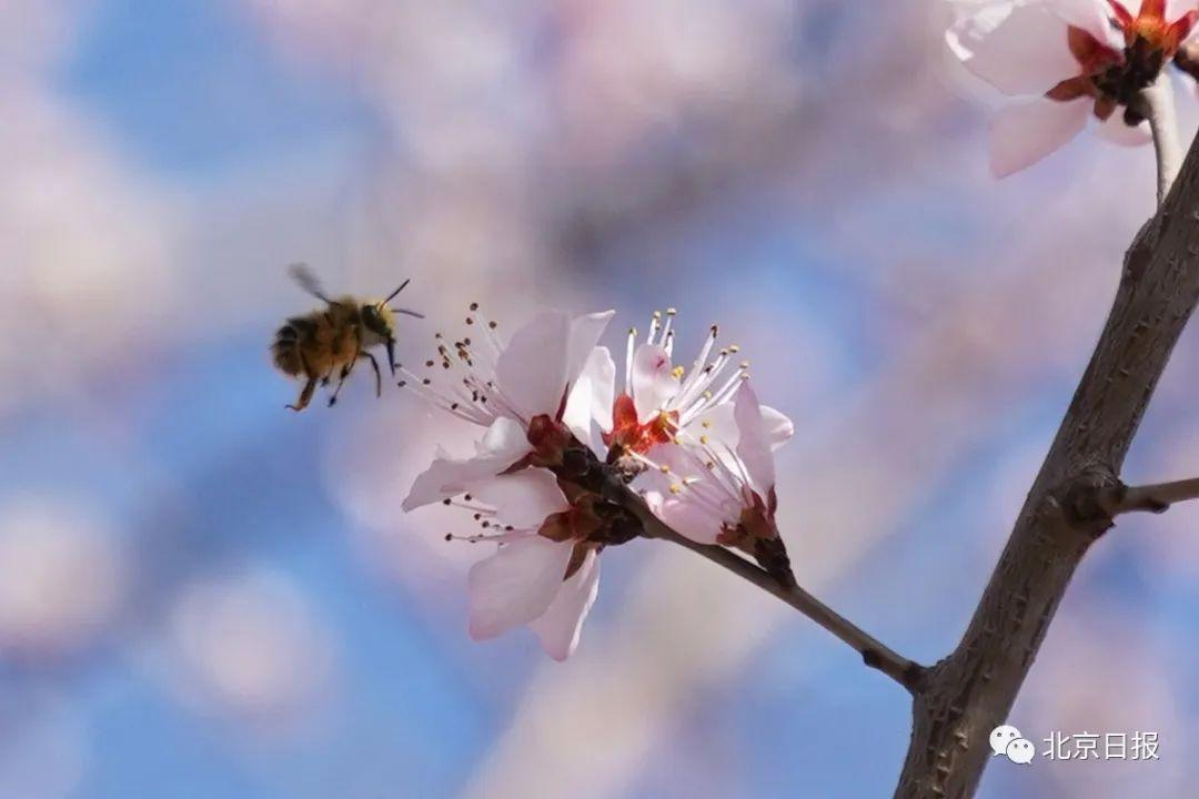 今日春分 燕归花开!春分意味着什么 春分节气朋友圈说说精选图片语句汇总
