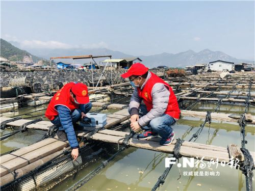 渔业部门党员志愿服务队在罗源鉴江渔排进行技术监测。记者 张笑雪 摄