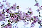 福建:花開時節,追隨春的腳步