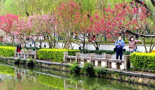 福州西湖桃花盛開 春意盎然