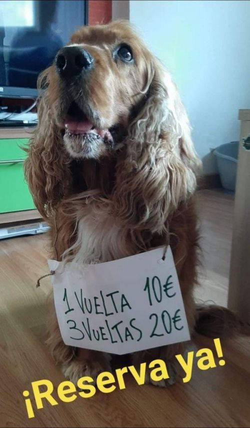 西班牙狗狗一天被遛38次 溜達到筋疲力盡