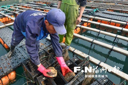 疫情波及整个行业的同时,也让相关各方深思——连江万吨鲍鱼滞销背后