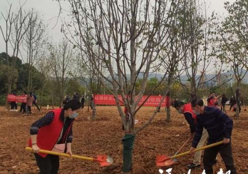福州晋安区党员干部义务植树 为晋安湖增绿添彩