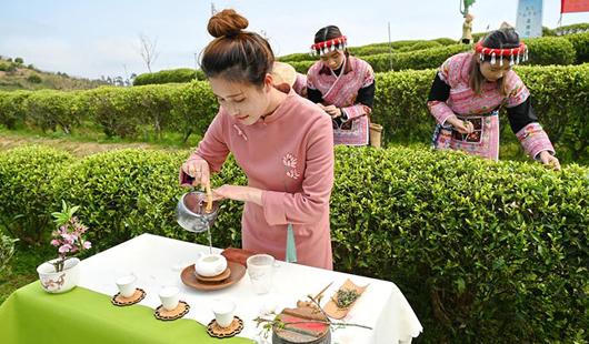 福州春茶节在福州晋安春伦生态茶园举行