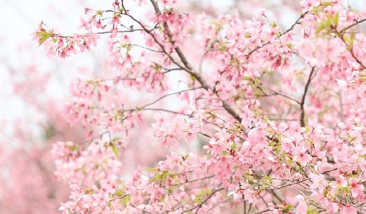 美炸!福州這片粉色世界你能抗拒嗎?