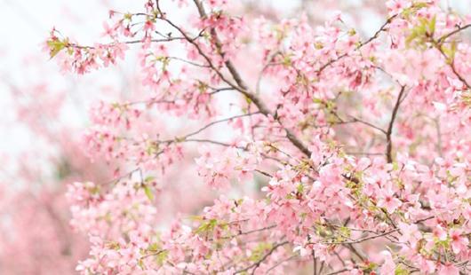 美炸!福州这片粉色世界你能抗拒吗?