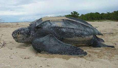 3月28日蚂蚁庄园答案今日答案 世界上体型最大的海龟是?