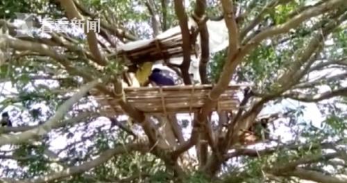 印度村民树上隔离什么情况 家里没有自己的单独房间来隔离