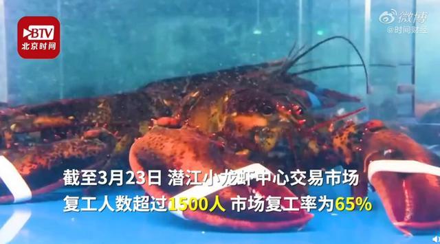 湖北小龙虾日销超650吨 销往全国360多个城市