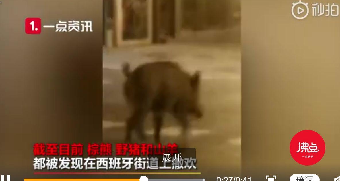 西班牙许多动物淡定上街散步怎么回事 西班牙许多动物淡定上街散步原因