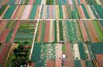 福建泉州:新鮮蔬菜采摘上市