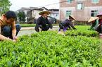 南靖和溪:發展優勢綠色產業 打通脫貧幸福路