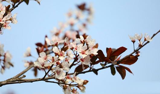 福州:春暖花已开,马尾美起来!