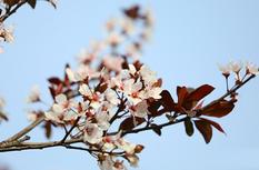 福州:春暖花已開,馬尾美起來!