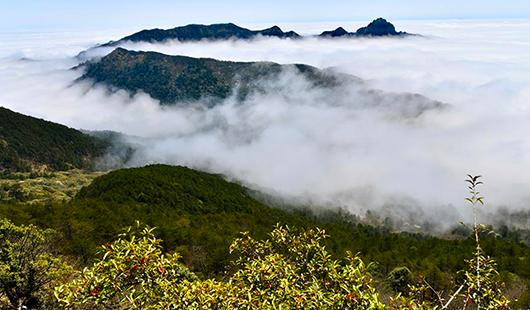 福建:春到武夷山 體驗生態美
