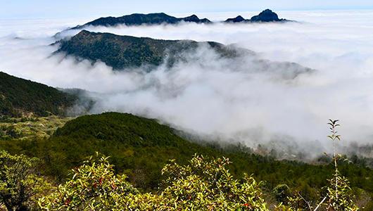 福建:春到武夷山 体验生态美