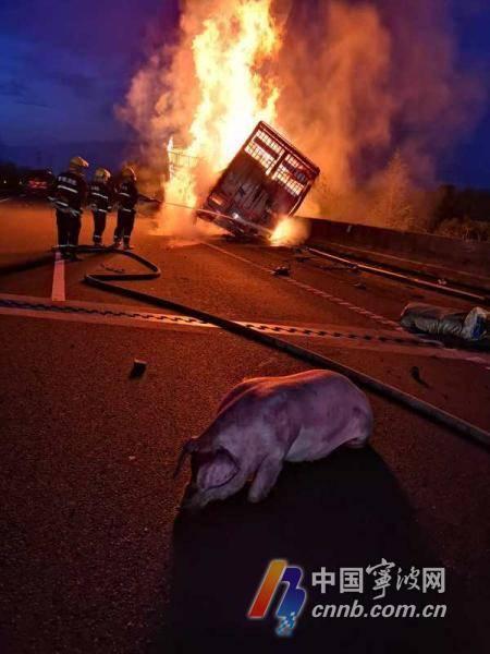 浙江一货车起火91头肥猪死亡现场图 货车起火的原因是什么?