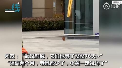武汉解封首日黄鼠狼上街讨饭什么情况?这一幕让人看了又惊奇又心酸