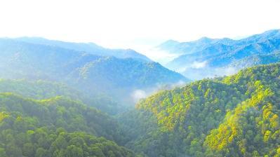 """龙岩长汀发力森林质量提升 """"绿起来""""还要""""好起来"""""""