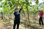 福建仙游:扶貧產業基地 助力精準扶貧