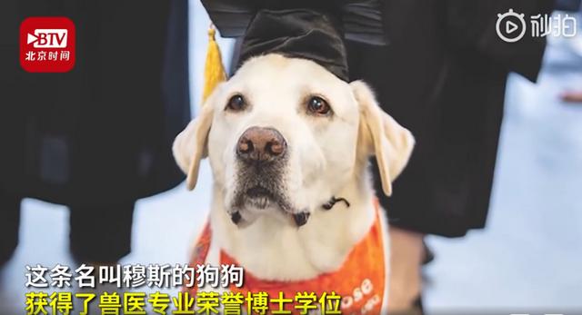 8岁治疗犬获博士学位怎么回事 具体详细经过令人赞叹