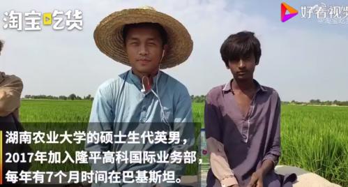 中国小伙在巴基斯坦推广杂交水稻怎么回事?中国小伙代英男为什么这么做
