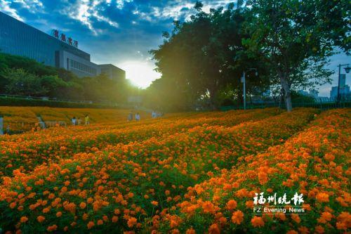 """福州多个公园景点上""""新妆""""!等"""