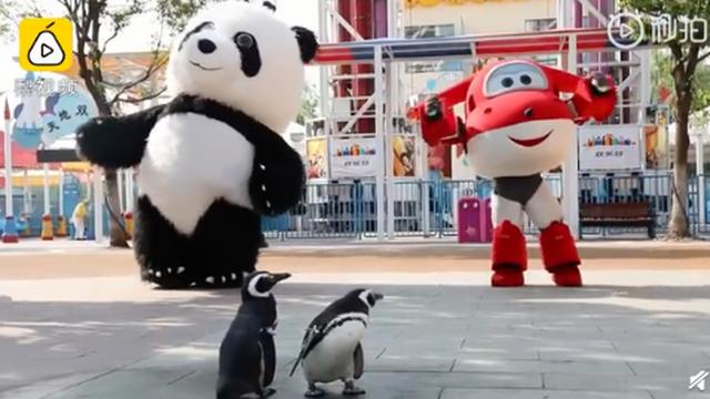 武汉欢乐谷有两只企鹅游客:憋久了,这次带来游乐场体验
