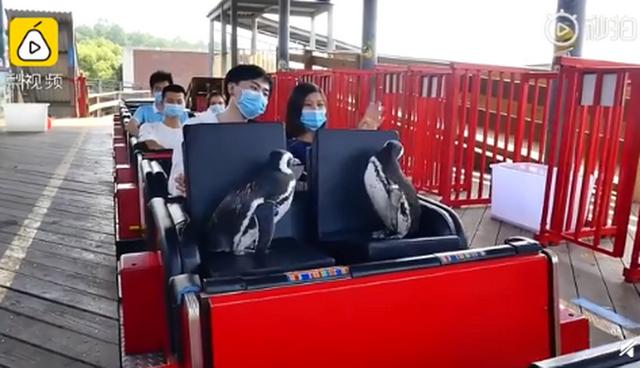武汉欢乐谷有两只企鹅游客怎么回事?现场照曝光真是太可爱了!
