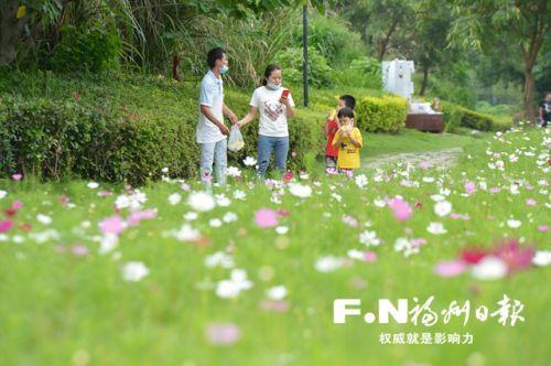 花海公園波斯菊漸漸進入盛花期。記者 池遠 攝