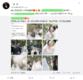 楊麗萍女徒弟和同性愛人結婚 婚禮現場甜蜜親吻