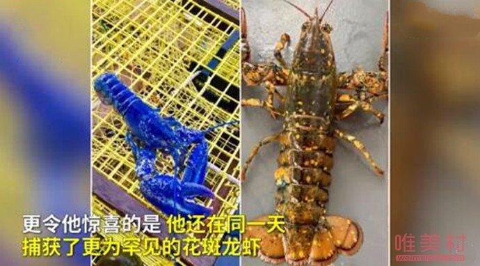 渔民捕获罕见彩色龙虾怎么回事 现场画面曝光令人震惊