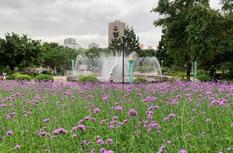 """美到窒息!長樂南山公園的""""普羅旺斯"""",等你來邂逅"""
