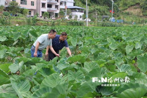"""闽清前5个月""""双百双千""""增产增效行动多项指标居全市前列"""
