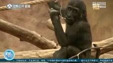 英國動物園將全面復開